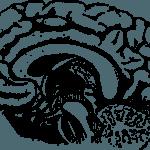 Las mejores imágenes del cerebro