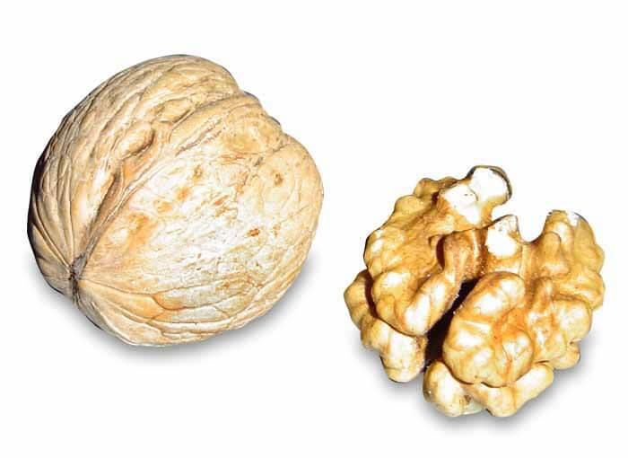 Nueces y Cerebro