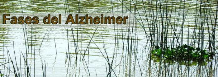 El Alzheimer y sus Fases o Etapas