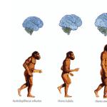 Homosapiens-evolucion-alzheimer-origen
