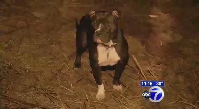 Un pit bull encuentra a una anciana enferma de Alzheimer y la salva de morir congelada