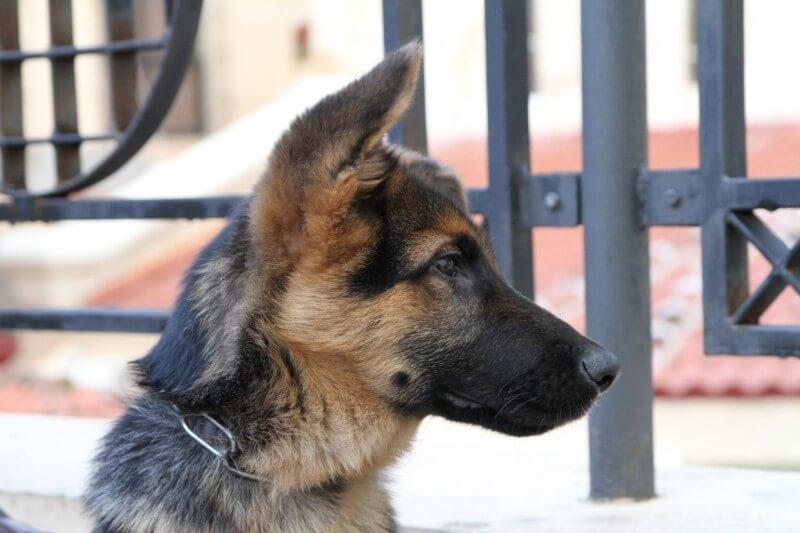 Terapia Canina Alzheimer