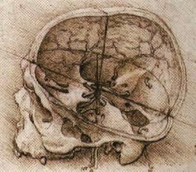 Dibujo de un cráneo humano realizado por Leonardo da Vinci (Fuente: Wikipedia)