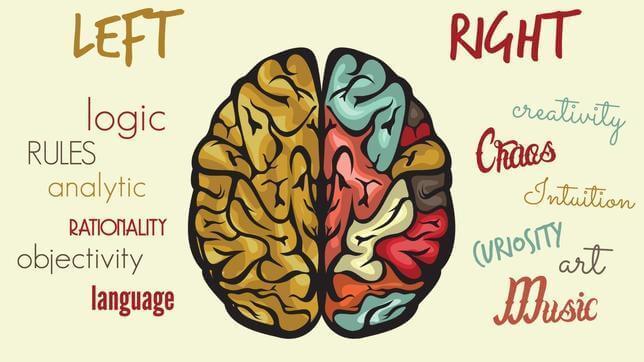 FOTOLIA Muchos libros de autoayuda aconsejan potenciar el lado creativo del cerebro