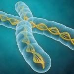 FOTOLIA ¿Lo genes lo determinan todo?