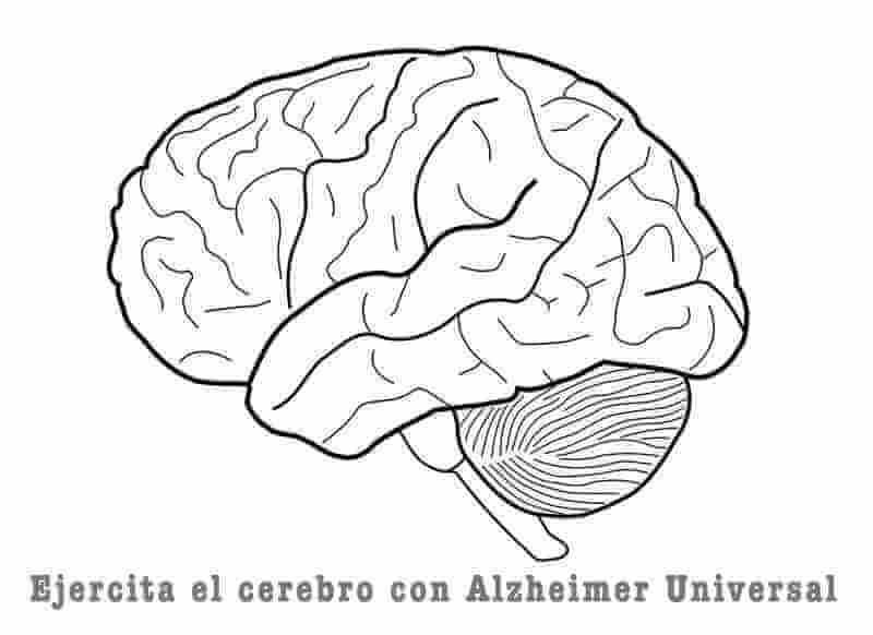Memoria y cerebro
