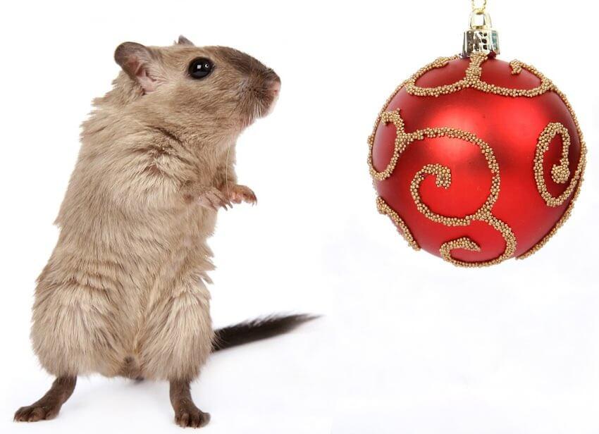 Iluminan neuronas y recuperan recuerdos en ratones - recuperan-recuerdos-ratones-alzheimer-1238887_1280