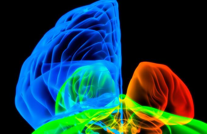 cervell_pag_26_1-fotonoticia-estudio-alfa