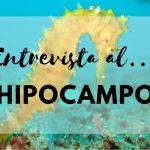 Entrevista al corazón del cerebro: el hipocampo